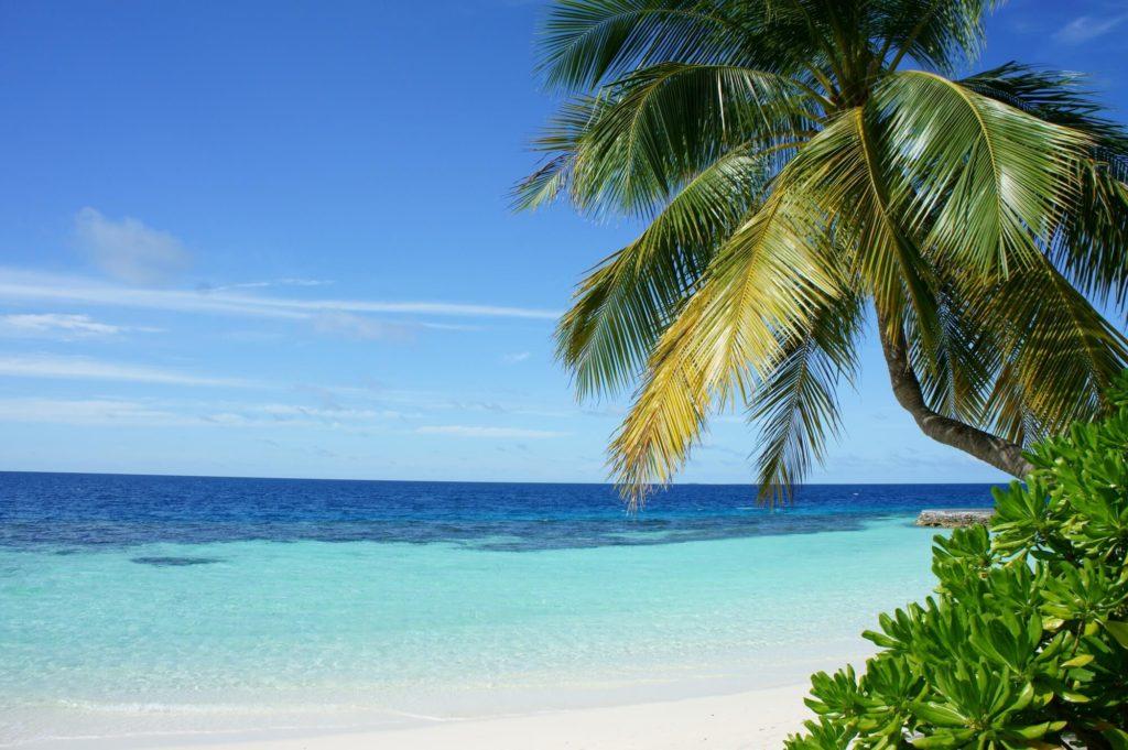 Palme vor blauem Meer